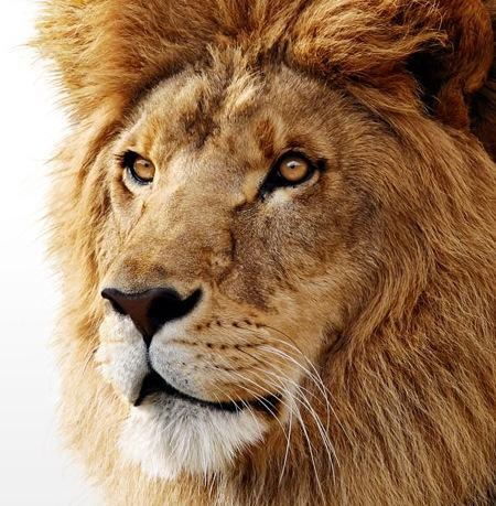 Una probadita: Mac OS X Lion esta en camino 1