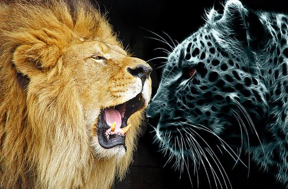 OS X Lion se enfrenta con Snow Leopard 2